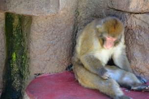 レクサプロ眠気イメージ