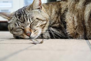 デパスの眠気と5つの対処法【医師が教える抗不安薬のすべて】