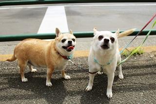 ペットロス症候群の症状と克服法|大切な犬や猫を失った時