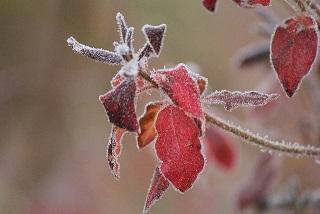 冬季うつ病(季節性情動障害)の全て|原因・症状・治療法など