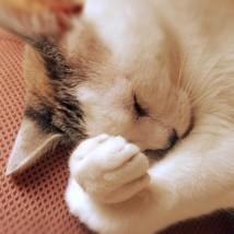 リボトリールの眠気
