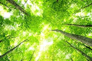 森林浴で得られる効果